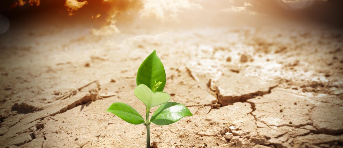 Photographie illustrant la résilience sous la forme d'une plante poussant dans un sol aride (image en vedette).
